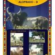 Dose de sêmen de touro da raça Guzerá - Aloprado D