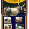 Dose de sêmen de touro da raça Guzerá - Nova Seita D