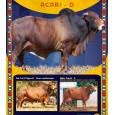 Dose de sêmen de touro da raça Sindi - Acari D