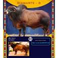 Dose de sêmen de touro da raça Sindi - Diamante D