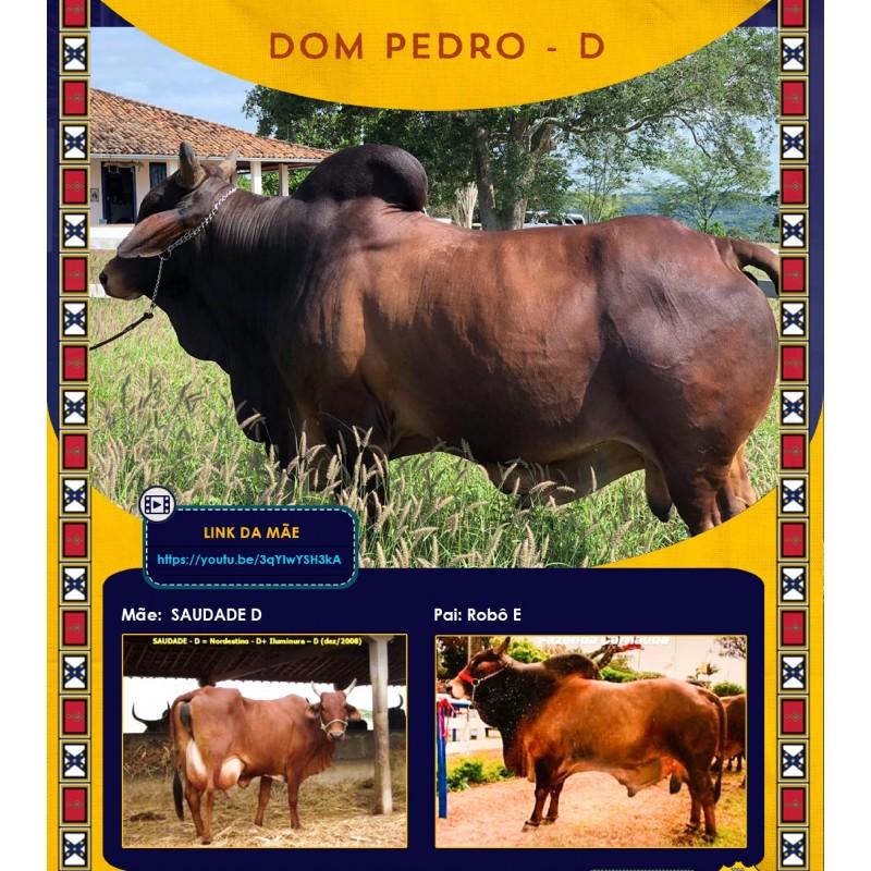 Dose de sêmen de touro da raça Sindi - Dom Pedro D